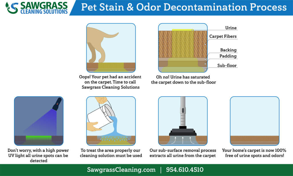 pet-stain-and-odor-removal-process-1024x615